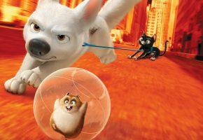 cinema, film, dog, Bolt, neko, cat, собака, кошка, хомяк, Вольт