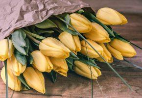 Обои тюльпаны, желтые, бутоны, букет