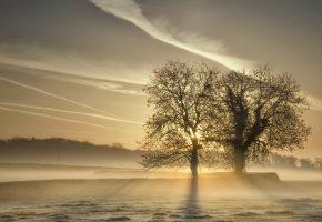 природа, поле, туман, деревья, солнце, лучи, утро