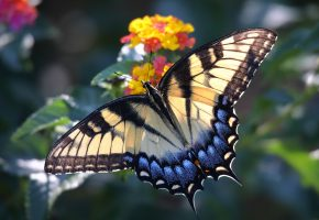 макро, насекомое, цветок, бабочка, крылья, macro, insect, flower, butterfly, wings