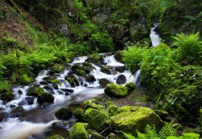 река, камни, мох, папоротник, зелень
