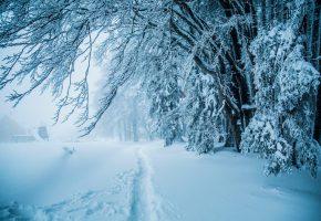 зима, лес, снег, деревья, тропинка