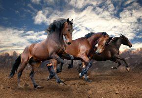 кони, скачут, тройка, коричневые, Животные