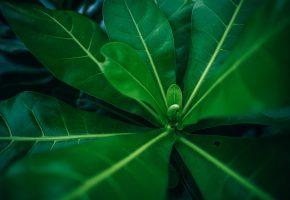 листва, деревья, Макро, зелень