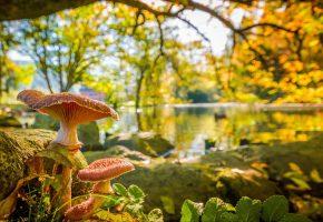 осень, листья, ветки, пруд, парк, дерево, грибы