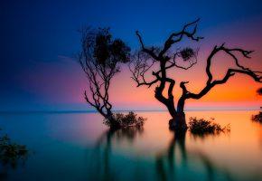 пейзаж, деревья, вечер, озеро, вода
