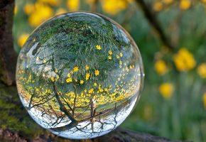 фокусировка, через, стеклянный, шар