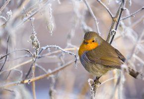 зимние, месяцы, выживания, птица, ветка, перья