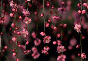 весна, цветение, красиво