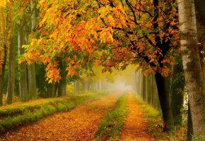 Осень, дорога, парк, лес, листья, желтые, деревья
