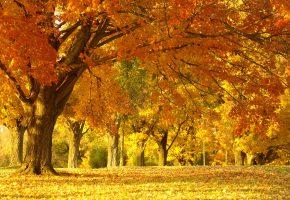 Природа, осень, солнце, деревья