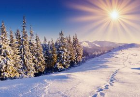 Зима, снег, сугробы, тропинка, солнце, ели