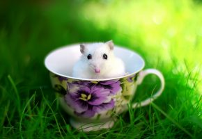 хомяк, чашка, трава, солнце, животное