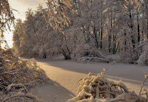 зима, снег, деревья, иней, солнце, блики